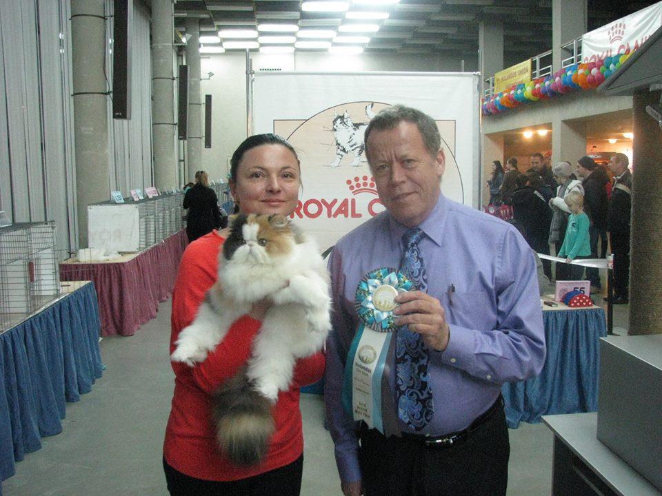 CFA Show in Kiev, November , 16-17 2013  Starbabies Diana of Forycat 7 Best kitten CFA Show in Kiev